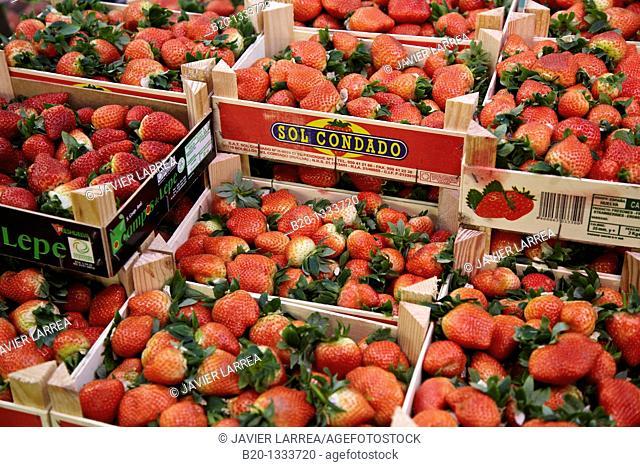Strawberries, Mercabilbao fruits and vegetables wholesale market, Basauri, Bilbao, Bizkaia, Euskadi, Spain