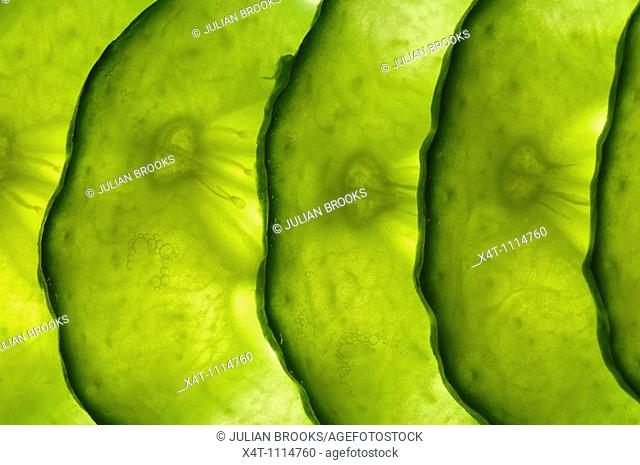 thin slices of cucumber lit from behind, overlapping in a line