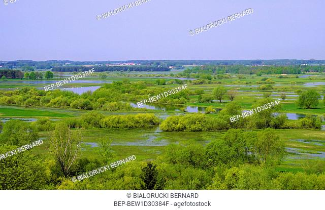 Panoramic view of wetlands covered with early spring green grass and woods in Narew River wildlife refuge in north-eastern Poland