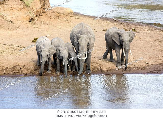 Kenya, Masai-Mara Game Reserve, Elephant (Loxodonta africana), herd drinking at Mara river