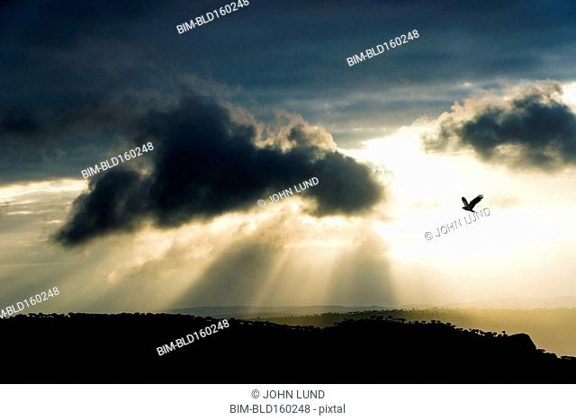 Bird flying in cloudy sky over remote landscape