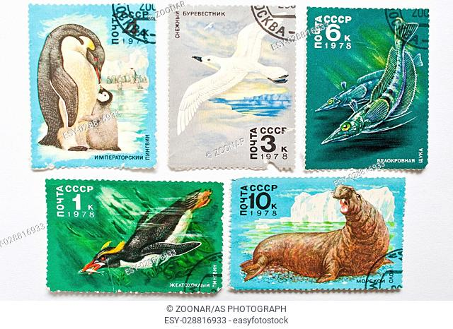 UZHGOROD, UKRAINE - CIRCA MAY, 2016: Collection of postage stamps printed in USSR shows animals from Antarctica, circa 1978