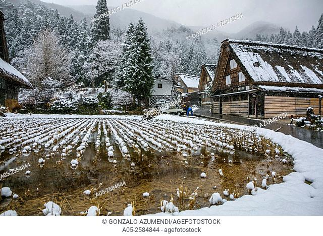 Traditional gassho zukiri farmhouses. Shirakawago. Chubu region. UNESCO World Heritage. Japan