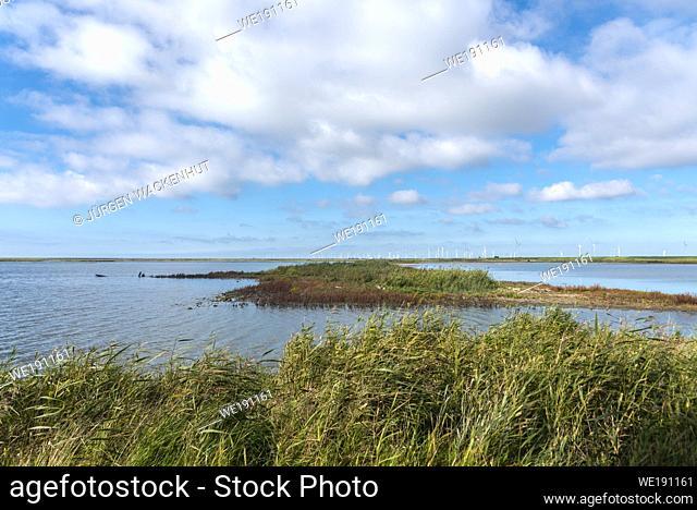 Landscape of the Beltringharder Koog near Luettmoorsiel, Reussenkoege, Schleswig-Holstein, Germany, Europe