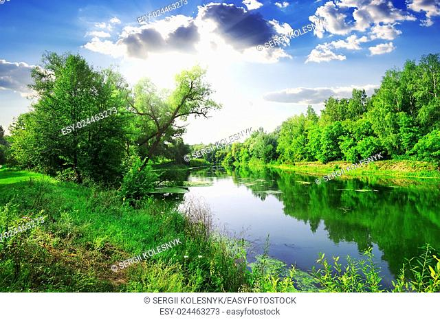 Green forest on river at sunny summer day