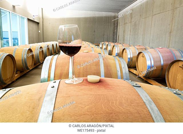 Wine glass on wooden barrels with maturing wine