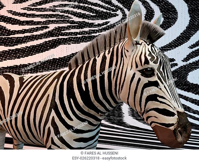 Zebra with same texture background pattern