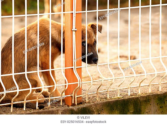 Lonly and sad abandoned puppy behind fence of a enclosure in a dog shelter. Looking scared