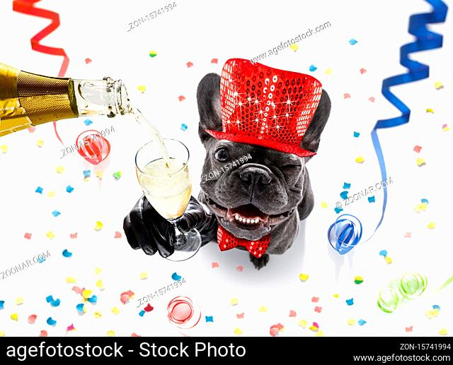 french bulldog dog celebrating new years eve with owner and champagne glass isolated on serpentine streamers and confetti