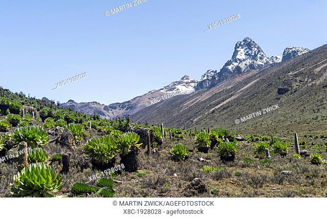 Mount Kenya national park in the highlands of central Kenya, a UNESCO world heritage site. The central part of Mount Kenya with Batian and Nelion seen through...