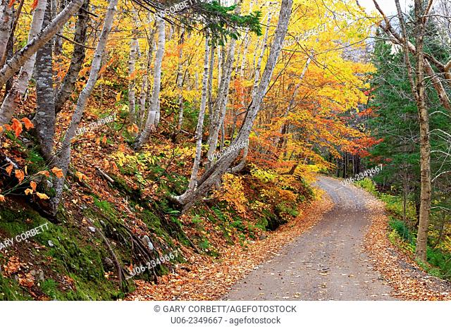 A country road windiing through the autumn forest on the Cabot Trail in Cape Breton, Nova Scotia, Canada