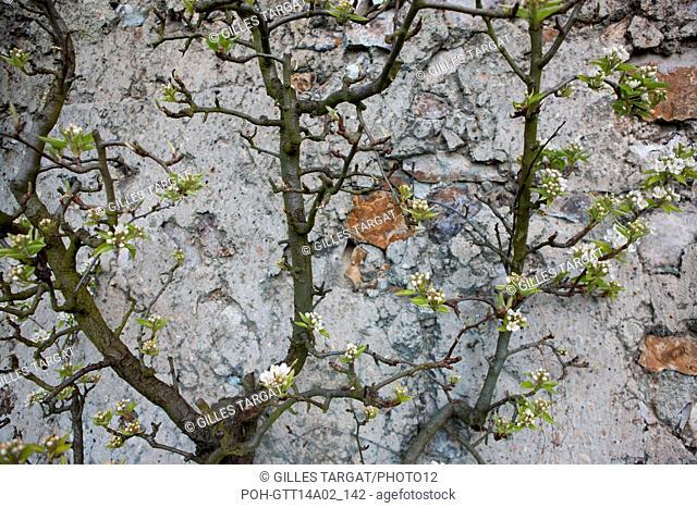 France, Montreuil-sous-Bois, 4 rue du garden Ecole, horticulture, Societe Regionale d'Horticulture de Montreuil, espalier training peach trees