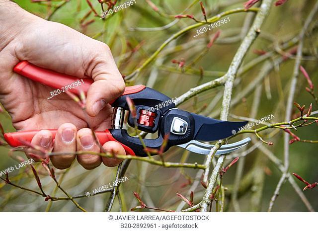 Gardener with hand tool, Pruner, Aiete Park, Donostia, San Sebastian, Gipuzkoa, Basque Country, Spain
