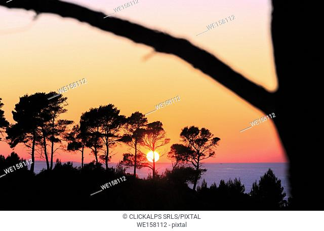 The sun at sunset falls behind the pines overlooking the sea. Peschici, Apulia(Puglia), Italy