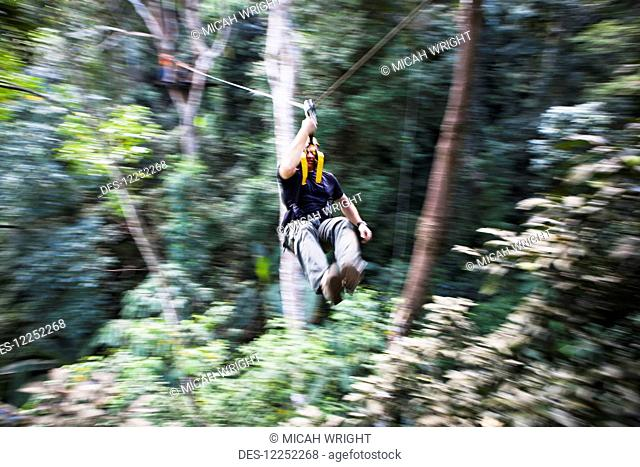 The Flight of the Gibbons, one of the most popular tours in Thailand; Chiang Mai, Thailand