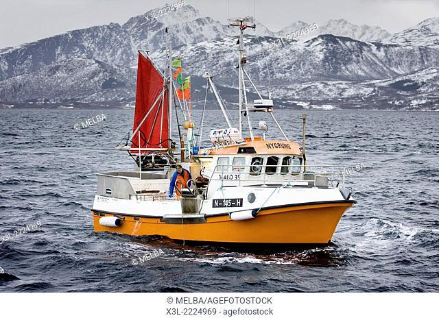 Fishing cod. Vesteralen. Norway