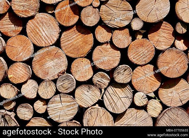 Woodpile in Rubi near Oberstdorf, Allgaeu, Swabia, Bavaria, Germany