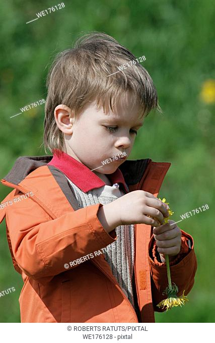Young boy enjoy summer time in the dandelion meadow