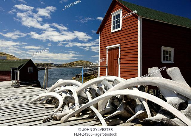 Whale bones stacked on stage, Change Islands, Newfoundland & Labrador
