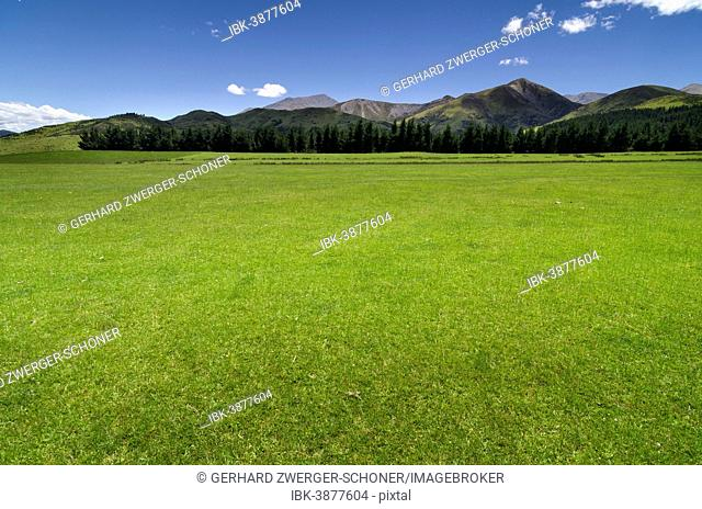 Green pasture, mountain range in the Canterbury Highlands at the back, South Island, New Zealand