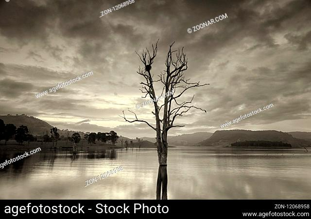 Single gnarled dead tree with large birds nest in its upper branches stands in a lake at dusk