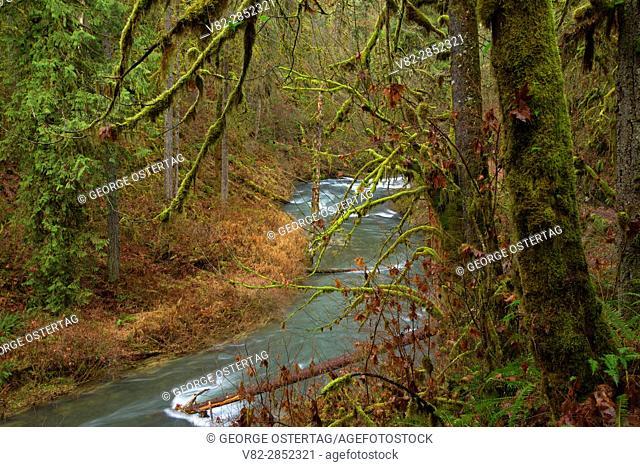 Silver Creek along Trail of Ten Falls, Silver Falls State Park, Oregon