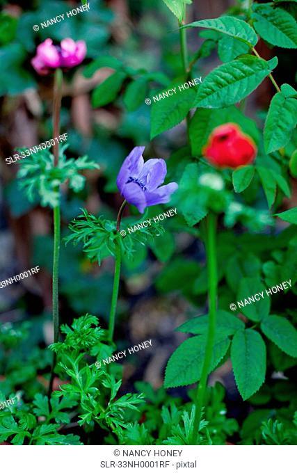 Multi-colored flowers in garden