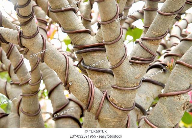 Bonsai tree Wrapped wire