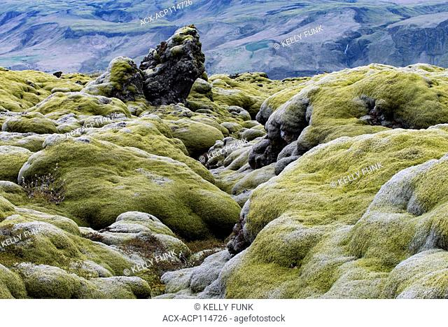 Heavy moss covers a lava field in the south of Iceland, North Atlantic region, Europe