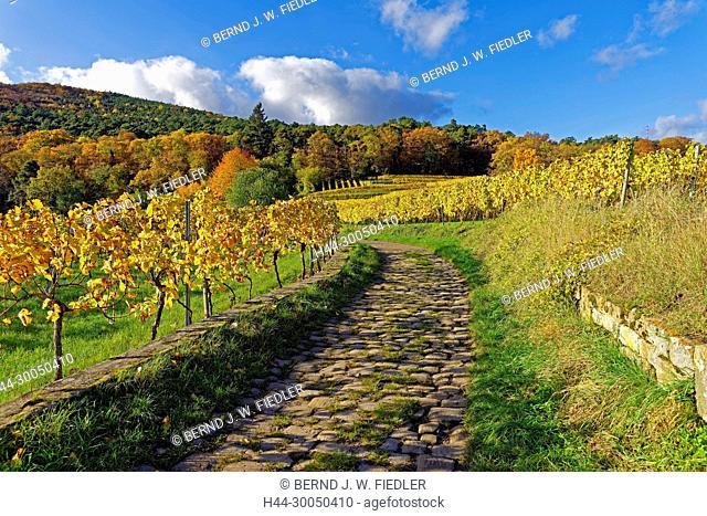 Vineyards, economic way, cobblestones, autumn foliage, Neustadt in Weinstrasse Germany
