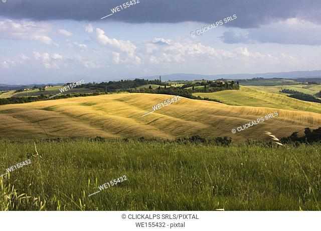 Green rolling hills and grass in the rural landscape of Crete Senesi (Senese Clays) province of Siena Tuscany Italy Europe