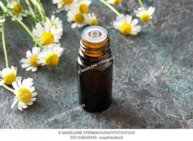 A bottle of essential oil with fresh German chamomile flowers in the background