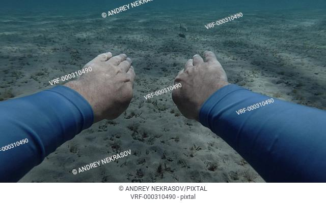 A man swim for a White-spotted puffer, Arothron hispidus over sandy bottom, from the 1-st person (virtual reality) Underwater shot, 4K / 60fps