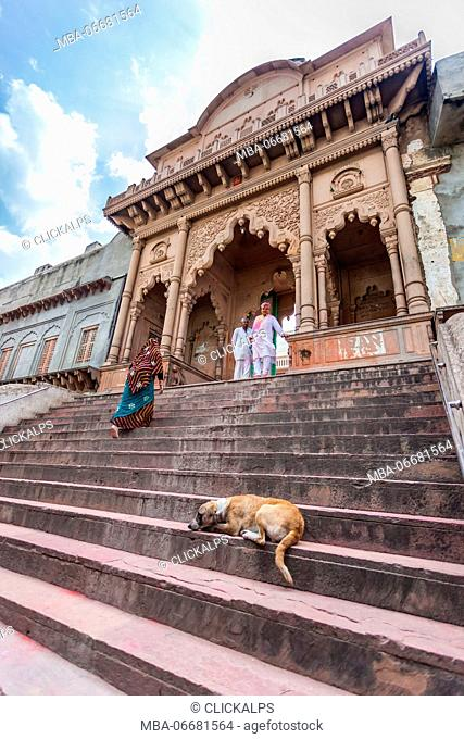 Asia, India, Uttar Pradesh, Nandgaon, a dog sleeping on the steps of the temple