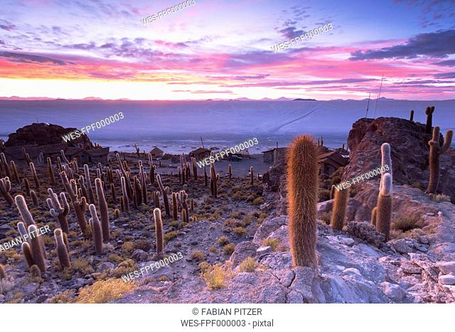 Bolivia, Salar de Uyuni, Isla Incahuasi