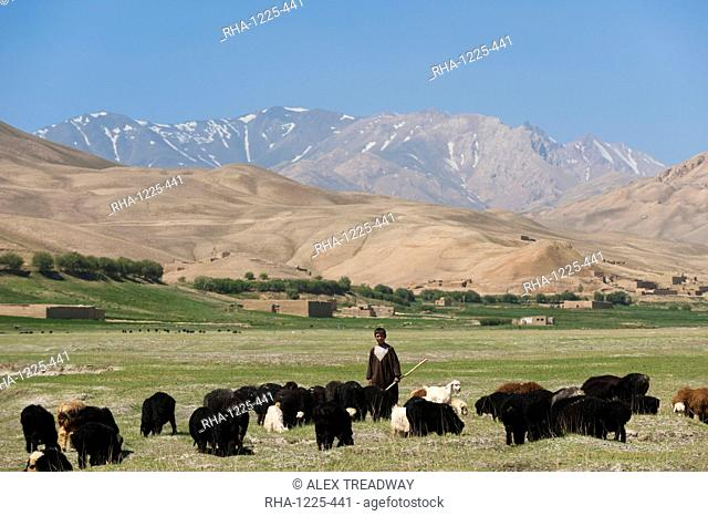 A boy takes his goats to graze in Bamiyan Province, Afghanistan, Asia