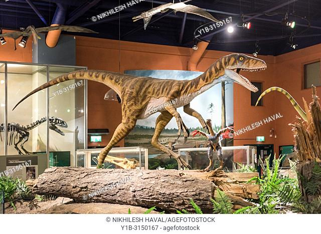 Eotyrannus lengi model, Dinosaur Isle Museum, Sandown, Isle of Wight, UK