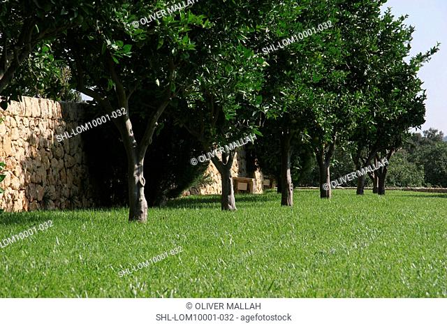 Row of trees in yard