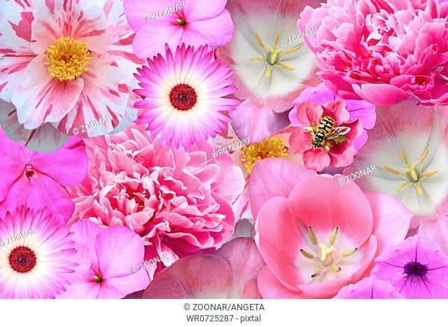potpourri of flowers