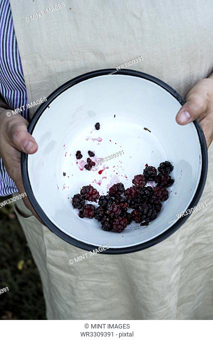 High angle close up of person holding round baking tin with blackberries