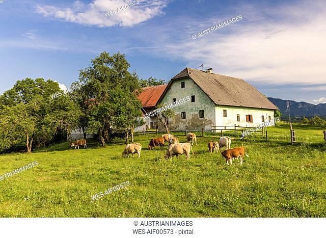 Austria, Carinthia, old farm house and cows on pastue