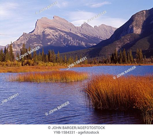 Marsh grass in Vermilion Lakes and northwest side of Mt  Rundle, Banff National Park, Alberta, Canada
