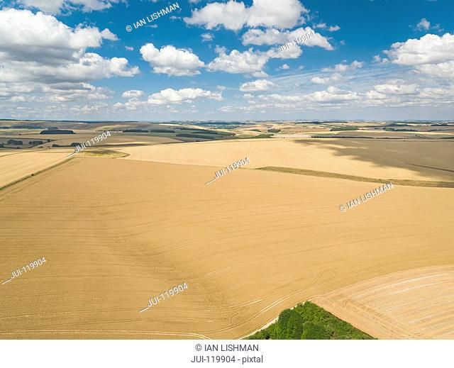 Aerial view of summer wheat and barley field crops for harvest and blue sky with fluffy white clouds on farm