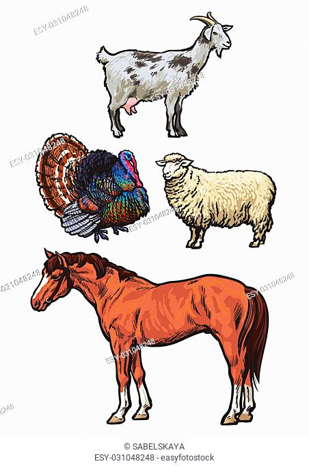 Farming, pets, set of cattle from a village, horse, goat, turkey, sheep, Set of colored animals isolated on a white background, animal sketch hand-drawn