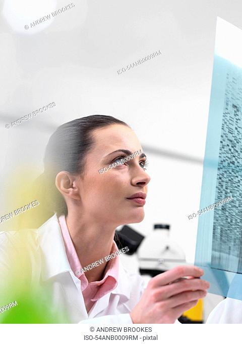Scientist examining DNA sequencing gel