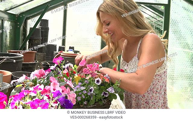 Woman creating colourful plant display in greenhouse. Shot on Sony FS700 in PAL format at a frame rate of 25fps