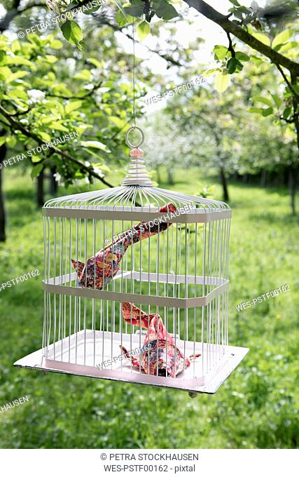 Origami cois in cage