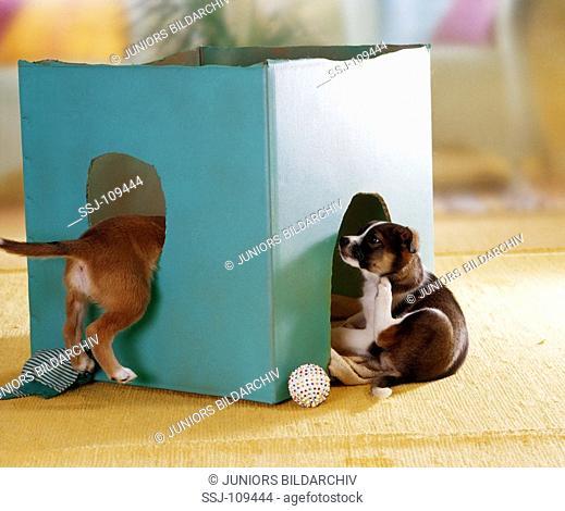 animal,dog,half-breed,puppy
