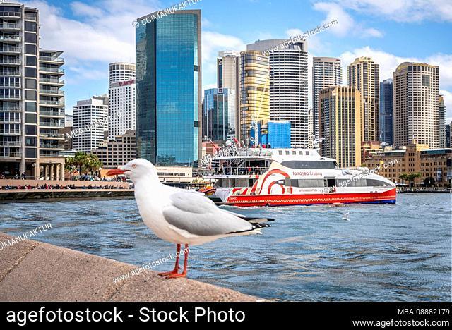 Australia Sydney Harbor Skyline