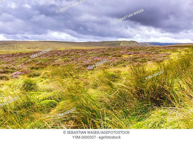 Landscape near Llan Ffestiniog, Gwynedd, Wales, United Kingdom, Europe